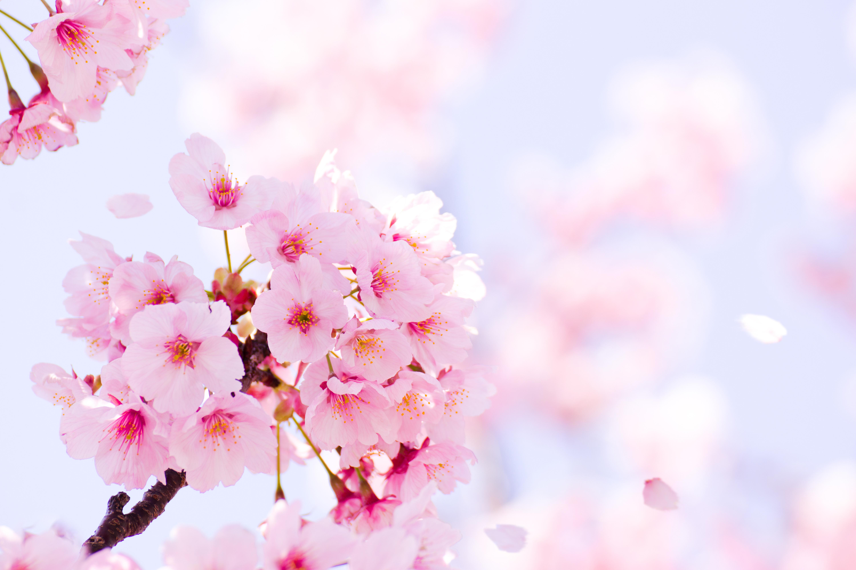 【有限会社ナカト】協力会社様募集のお知らせ